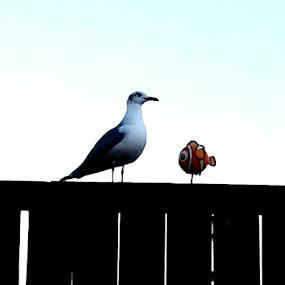 Swim Nemo swim for your life !!!!! by Sherri Perkins - Animals Birds
