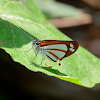 Mariposa saltarina plateada