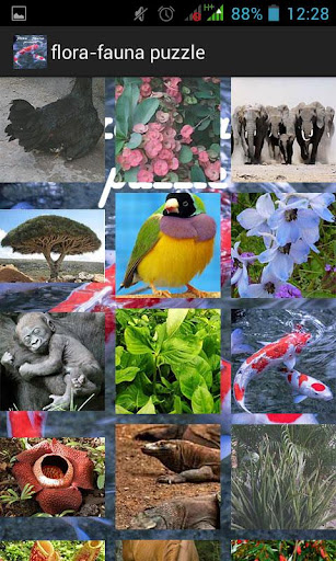 Slide Puzzle Flora Fauna