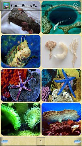 珊瑚礁壁紙
