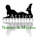 Attiev Nature and Macros icon