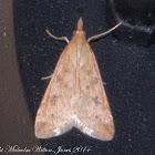 Herbal Moth