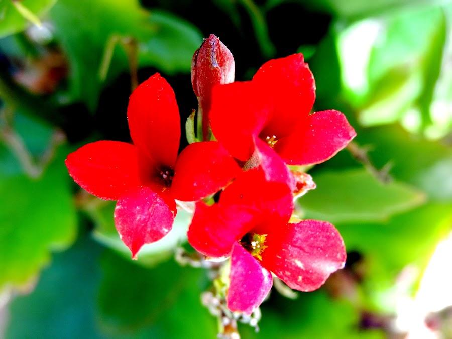 by Mackenzie Rosenlieb - Flowers Flower Gardens