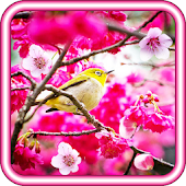 March 8 Spring live wallpaper