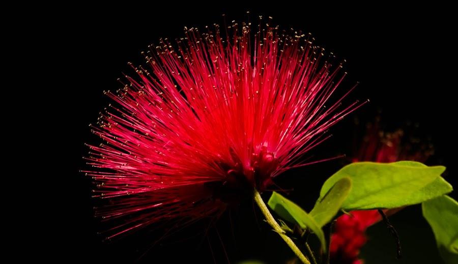 Red flower by KG P - Flowers Single Flower ( red flower )