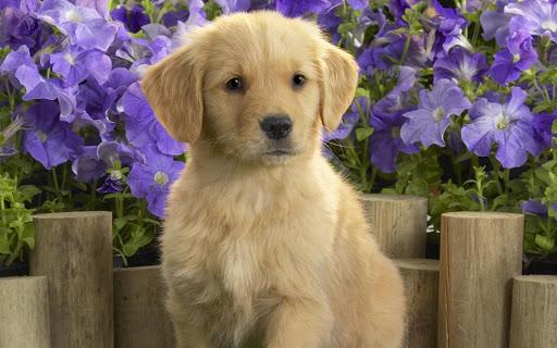 小狗狗壁纸
