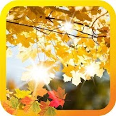 Autumn Leaves live wallpaper