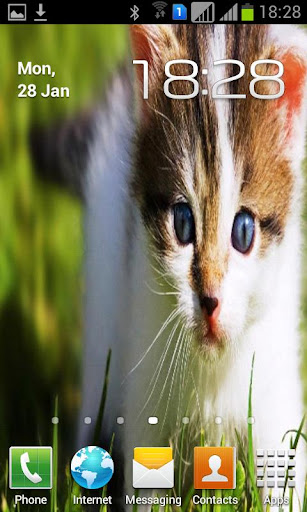 Cute Kitty Cat Wallpapers