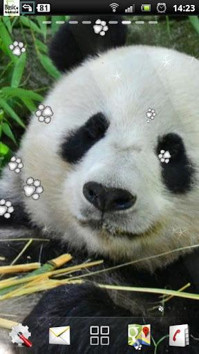 大熊猫LWP