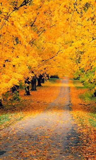 【免費個人化App】Autumn Live Wallpapers-APP點子