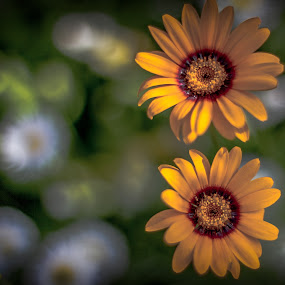 by Rui Quinta - Flowers Flower Gardens (  )