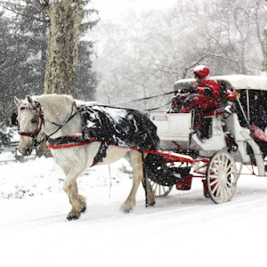 Horse and Buggy in Central Park Snowstorm pixoto.jpg