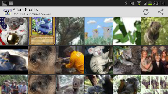 Adora Koalas - Koala Pictures - screenshot thumbnail