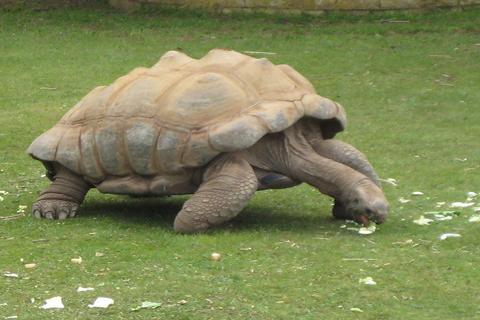 Tortoise Wallpaper LWP - screenshot