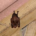Bat (Costa Rica)