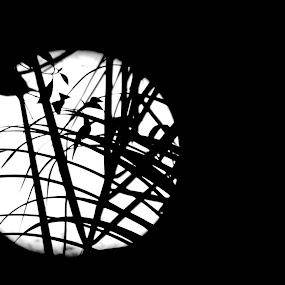Moonlight View by Imteaz Ahmad - Black & White Abstract