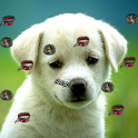 Puppy Live Wallpaper 2 logo