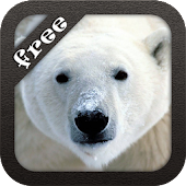 Polar Bear Live Wallpaper Free