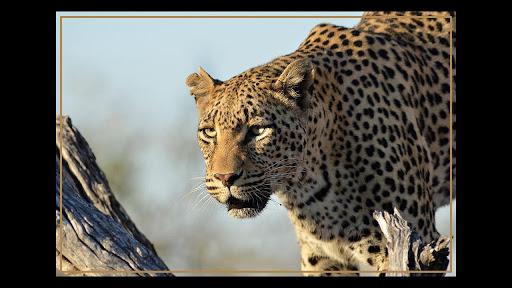 Kruger Park Wildlife Book 2.0