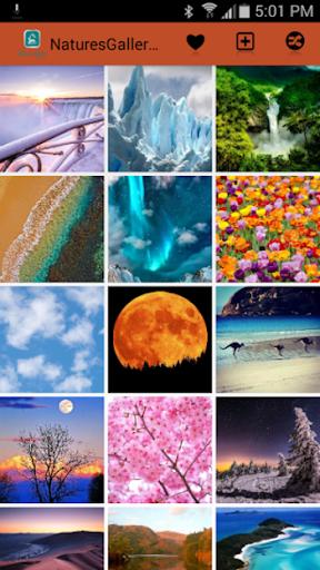 Natures Gallery Wallpaper