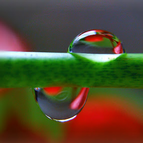 by Rayna Brilliantsyah - Nature Up Close Natural Waterdrops