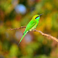 Birds of Belgaum