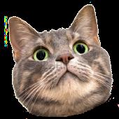 Spinning Cat Face