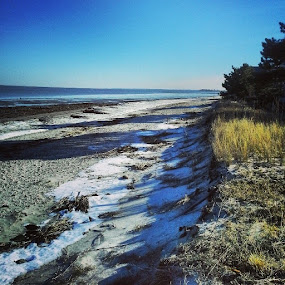We drove down to check out this beach...Pickering Beach in Dover, DE. Not much snow around here. by Dianne Collins - Landscapes Beaches ( shore, sand, waves, snow, solitude, delaware, beach, lonely )