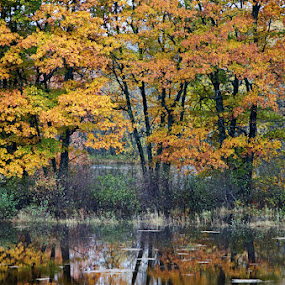 Riverside Trees by Jeff Galbraith - Nature Up Close Trees & Bushes ( water, reflection, colourful, autumn, colorful, fall, trees, leaves, river )