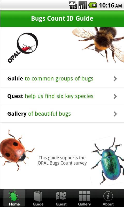Bugs Count- screenshot