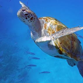 by Jen Cornell - Animals Sea Creatures ( , sea creatures, underwater life, ocean life )