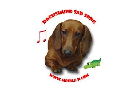 Dachshund sad song DONATE- screenshot thumbnail