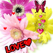 Love Flowers Butterfly Live Wa