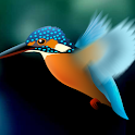 Kingfisher Live Wallpaper icon