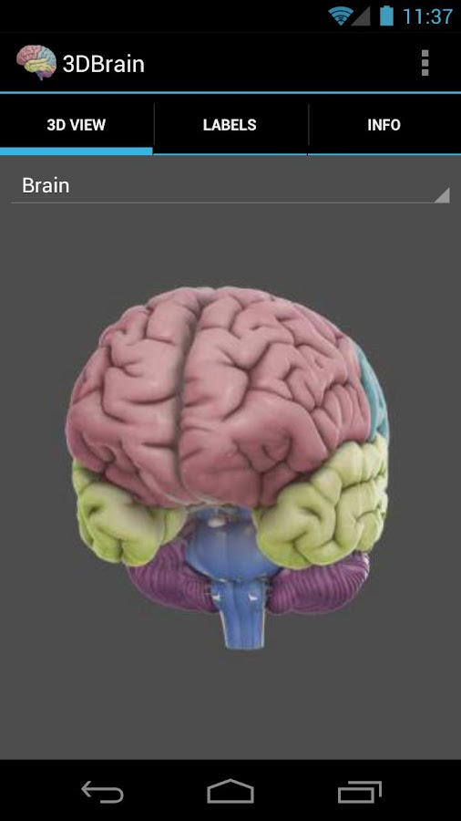 3D Brain - screenshot