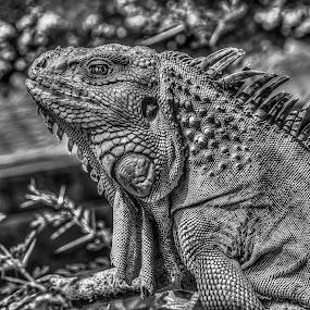 alone by Peter Schoeman - Black & White Animals ( reptiles, sea, beach,  )