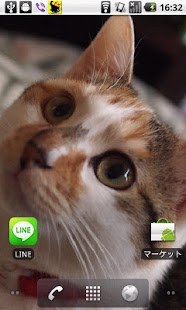 Cats Charity Live Wallpaper - screenshot thumbnail
