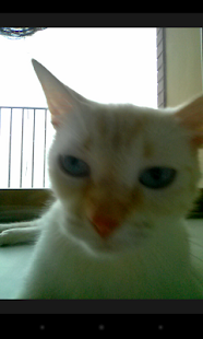 Snapcat - Photo app for cats- screenshot thumbnail