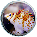 Real Fish Live Wallpaper icon