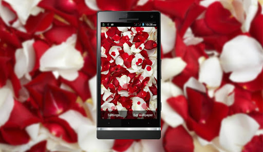 Red Rose HD LiveWallpaper