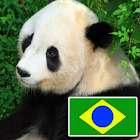 Animals in portuguese icon