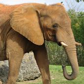 Elephant Noise