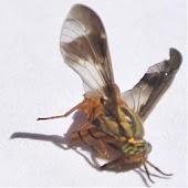 Deer Fly Bug Repellent