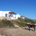 Horse (Cavallo)