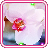 Orchid Love live wallpaper