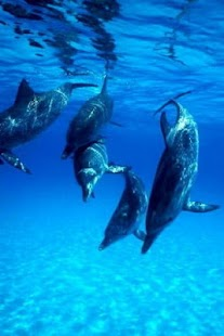 Magic touch:Beautiful dolphins