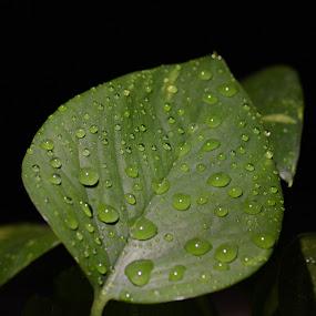 by Sathyanarayanan Shanmugam - Nature Up Close Leaves & Grasses (  )
