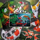 GoldFish Find Difference Game
