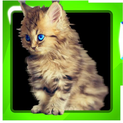 The Cute Kittens Database LOGO-APP點子