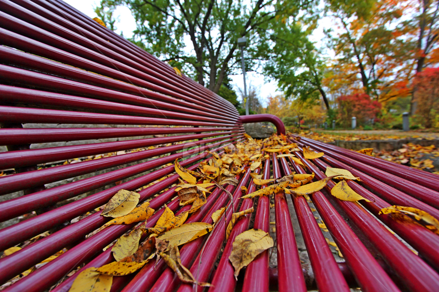 by Dipali S - Artistic Objects Furniture ( vertical, wood, bench, solitude, leaf, object, furniture, tree trunk, spring, iron, photography, comfortable, alley, fall leaves on ground, fall leaves, color image, cold )